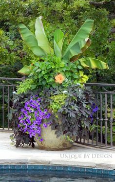 Beautiful container garden...tropical