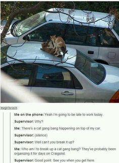 funny animals, cats, gang bang, laugh, stuff, funni, cat gang, humor, bangs
