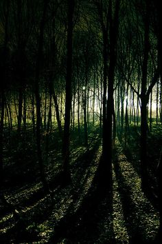 ♀ Dark green woods In a forest