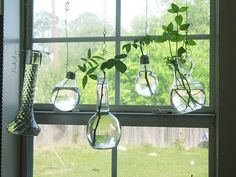 great way to hang plants