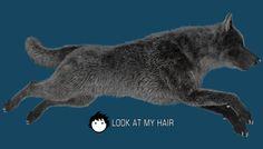 Wolf version 2 wolf version, imag, render