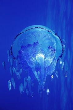 Jellyfish | Ilias Varelas