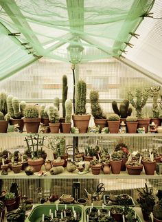 Cactus nursery. http://www.candystorecollective.com