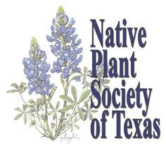 Monarch project announces garden grants | Native Plant Society of Texas