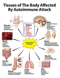 Tissues of the body affected by autoimmune attack.