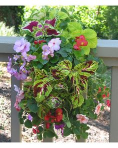 Mixed shady plants