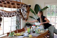 The Giraffe Manor in Kenya
