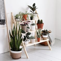 DIY Ladder Plant Sta