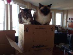 Had our first FreshDirect delivery, it was wonderful. The cats loved it too! cat