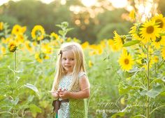 Sunflower photo shoot.