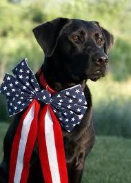 patriotic dog :)