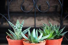 3 Houseplants That Help Clean the Air