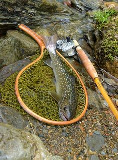 Nice Bull! great Bamboo rod and way cool net. Great style points awesome! fli fish, beauti net, fish trout, nice catch, fli rod, fly fishing