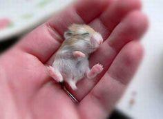 hamster baby!