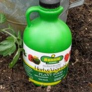 A natural fertilizer derived from seed extract is our secret to success at Bonnie Plants. Just dilute with water and pour from can or use a hose end sprayer