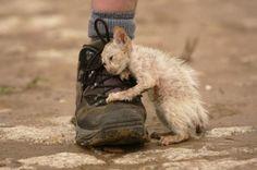 Kitten from October 2011 floods in Thailand…awwwwwwwwwww