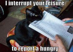 I interrupt your leisure