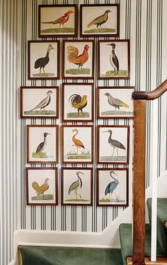 18th-c. bird engravings and stripes