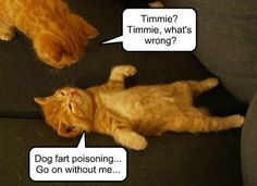 funny cat meme with an orange tabby kittens