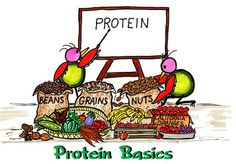 Proteins are chains of amino acids. They contain nitrogen, carbon, hydrogen, and oxygen. Some proteins are hormones.