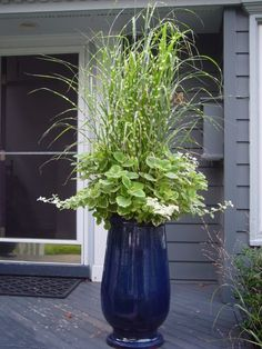 Perfect plant combination for this beautiful blue glazed container.
