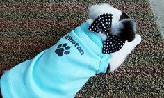 Boston Terrier Teacup Toy poodle Pomeranian English Bulldog dog