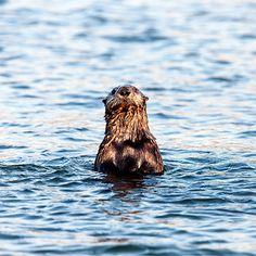 Top spots to go in Monterey Bay, CA