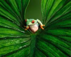 frog #animals