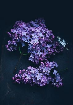 Lilacs by Call me cupcake, via Flickr