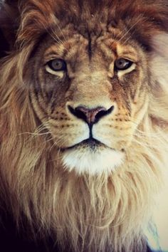 """"""" 'I have come,' said a deep voice behind them. They turned and saw the Lion himself, so bright and real and strong that everything else began at once to look pale and shadowy compared with him.""""   ---C.S. Lewis, The Silver Chair"""