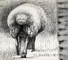 Sheep Study 1972. etching ~ Henri Moore