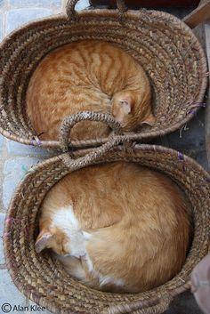 cats sleeping in baskets