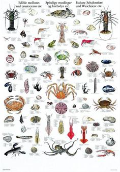 Bottom dwelling insects of the sea. YUM??? NOT!