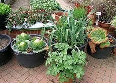 No Garden? Here Are 66 Things You Can Can Grow In Containers.
