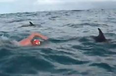 A Pod Of Dolphins Swam With This Man For Over An Hour To Protect Him From A Shark