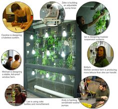 This hydroponic, vertical garden's working prototype is a drip system made from recycled water bottles, holding 25 plants.  Beans, tomatoes, cucumbers, arugula, basil, lettuce and kale are thriving.  #hydroponics