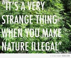 """If more people took the time to understand the history of why marijuana is illegal, maybe they wouldn't hate as hard as they do after they learned a few things about the """"narcotic"""". . . . ."""