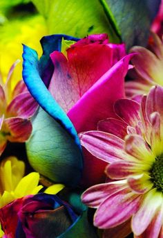 colorful flowers, rainbows, front yards, food coloring, rainbow roses, paint brushes, garden design ideas, rainbow colors, popular pin