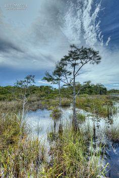 Everglades National Park, Florida.