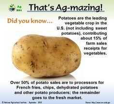 Potato Sales