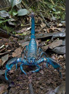 Scorpio = Scorpion