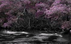 "Saatchi Online Artist Laurent de Posson; Photography, ""Thinking of Red Lilies"" #art"