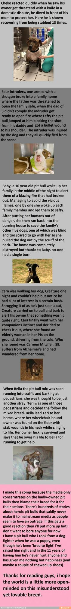 Lots of spelling errors in this, but super sweet nonetheless. Dogs are amazing.