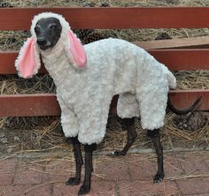 Woof in Sheep's Clothing Costume by RebelWag on Etsy