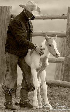 Cowboy Steadies Foal