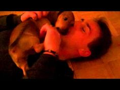 A man who loves his dachshund.  There is nothing sweeter to see. #dachshunds #dogs #puppy #cute #video #pets