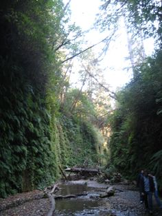Fern Canyon (believe they shot a jurassic park scene here)