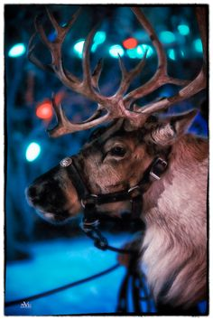 Join us for the 2014 Spruce Meadows International Christmas Market presented by TELUS. There are only two weekends left. Visit www.sprucemeadows.com for more information.