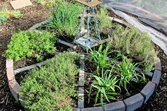 herb circle - excellent way of using old bricks