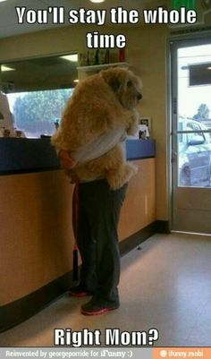 anim, funny dogs, cutest dogs, teddy bears, honey bear, funny dog pictures, dog funnies, funny puppies, big dogs